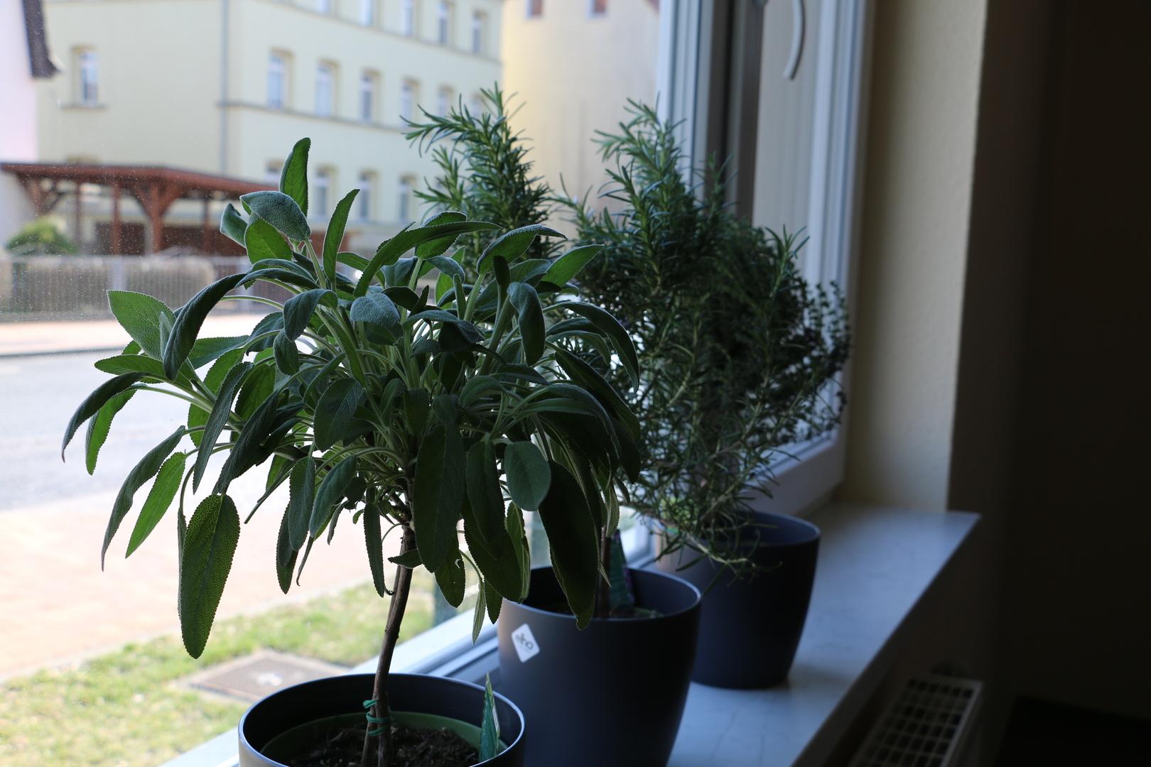 verschiedene Kräuter auf der Fensterbank